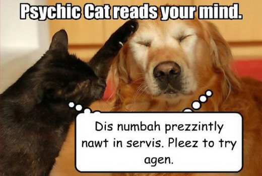 psychic lottery cat